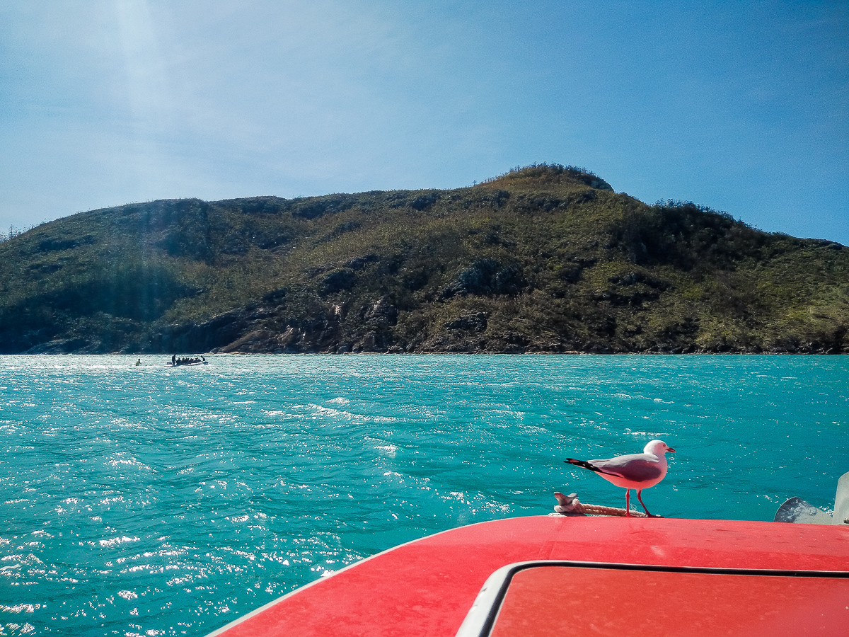 mouette sur un bateau dans les whitsundays