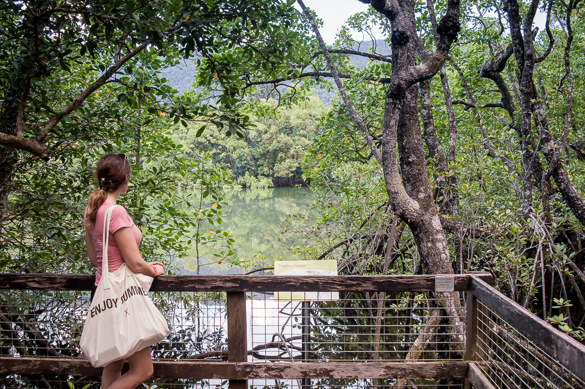 passerelle dans la mangrove de daintree