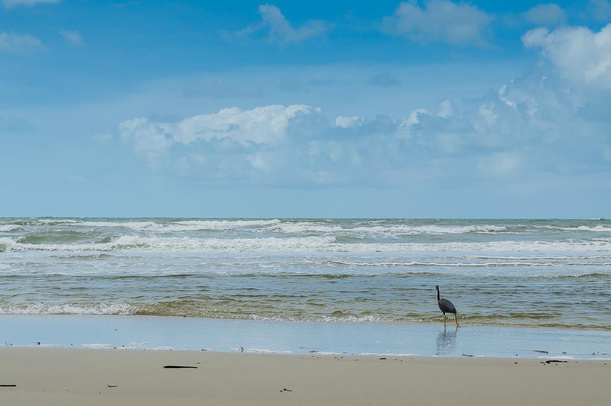 oiseau sur la plage de cap trbulation