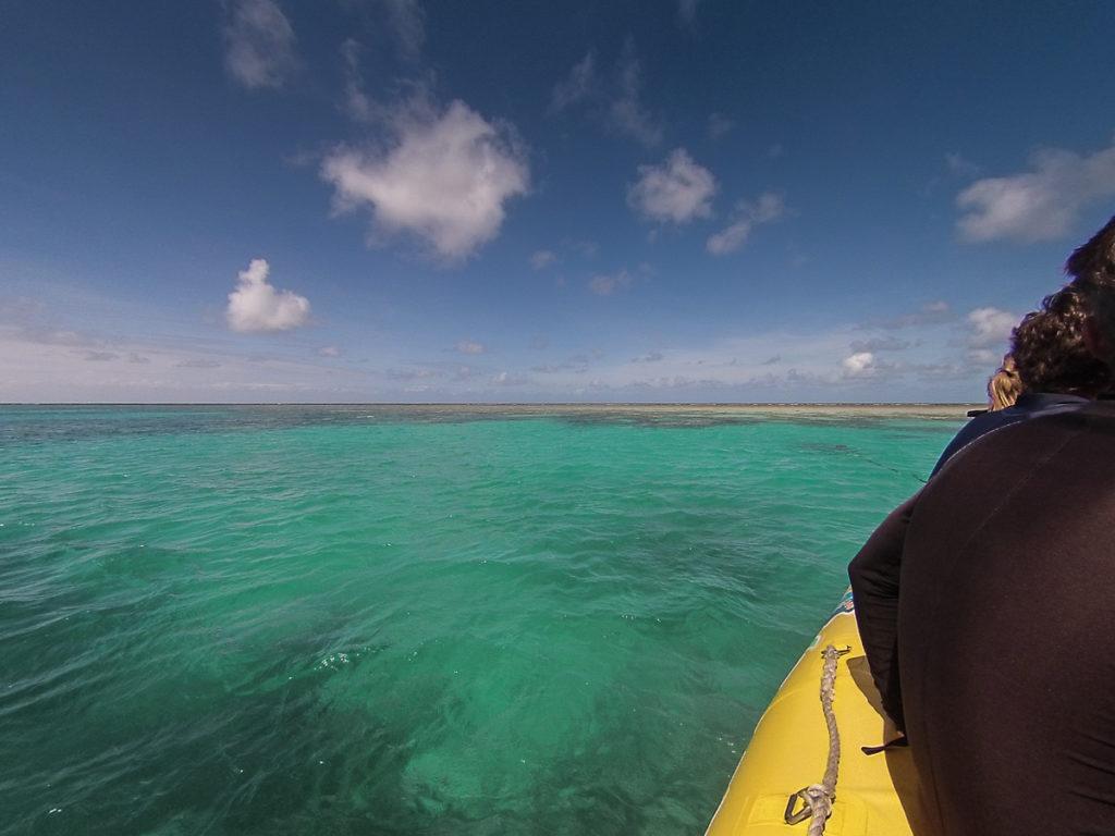 ocean-safari-cap-tribulation