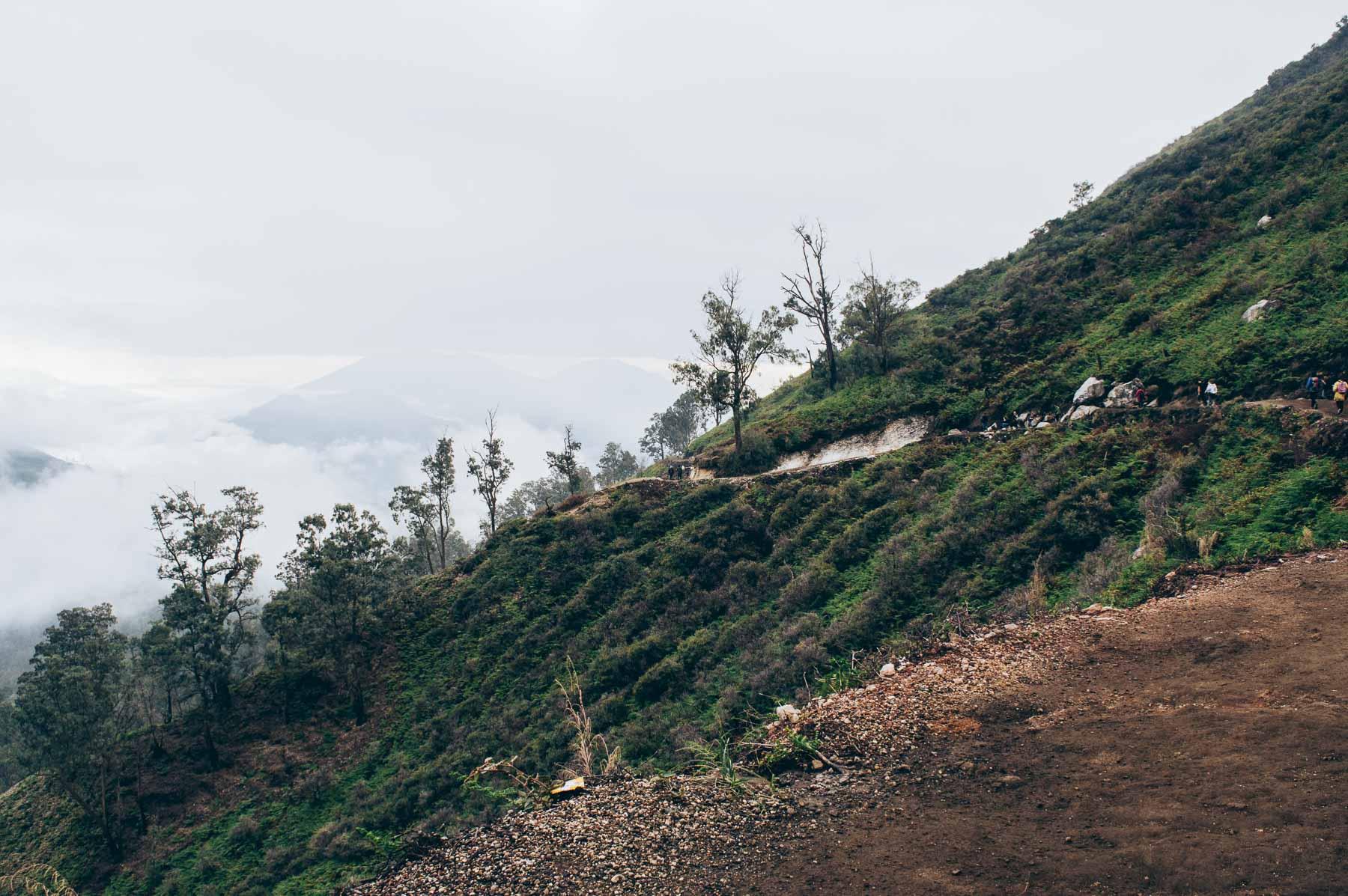 forêt vers le volcan Ijen