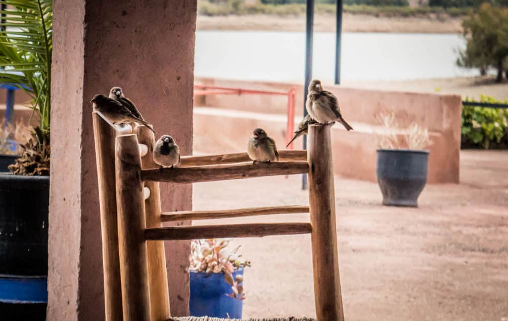 oiseaux à Agafay