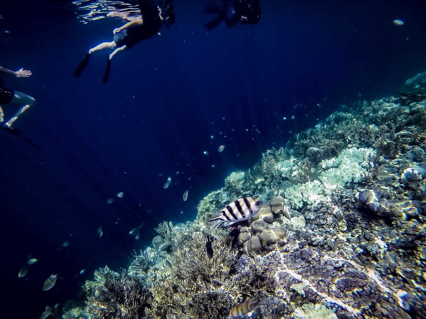 poissons multicolores à pulau Menjangan