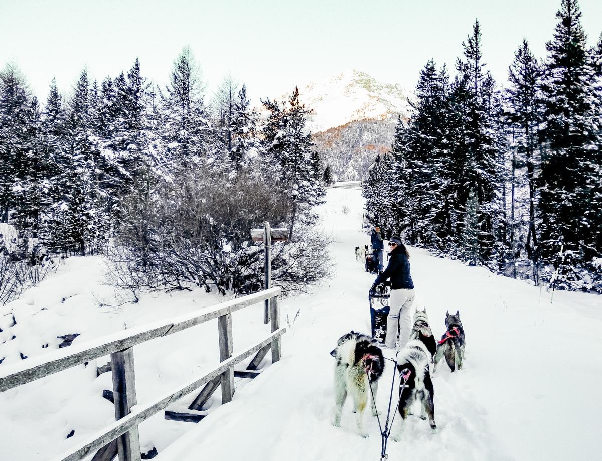 conduite d'attelage dans les Alpes