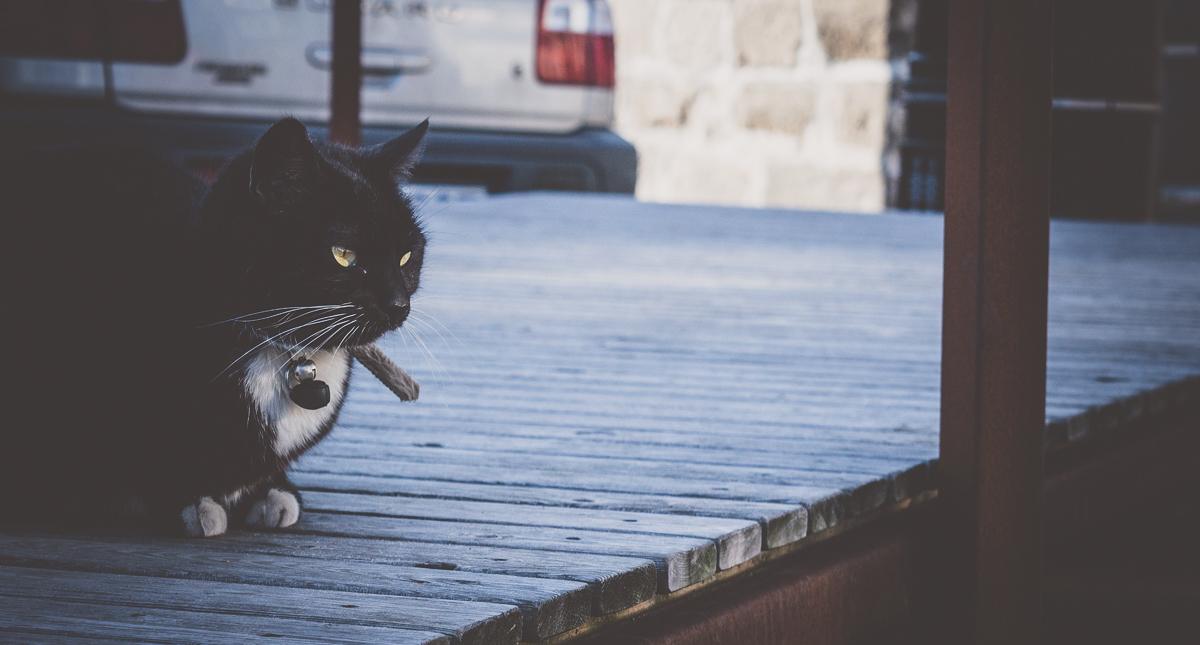 chat des rues à reykjavik