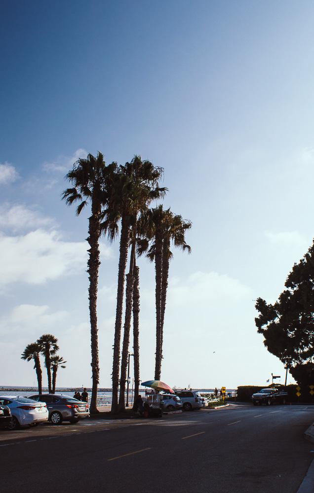 promenade le long de la plage à Venice
