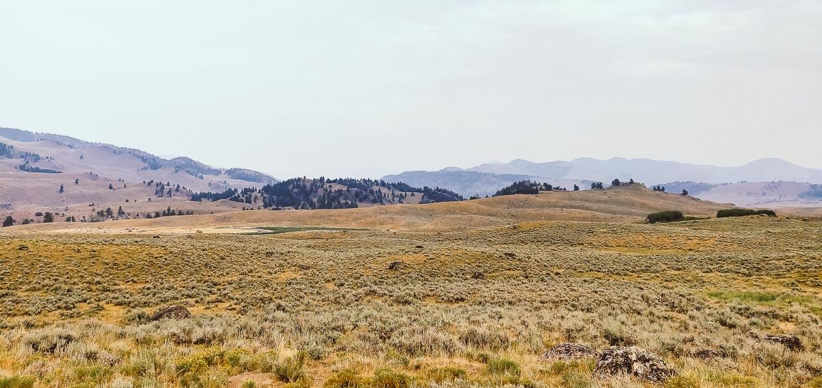 bisons dans Lamar Valley à yellowstone