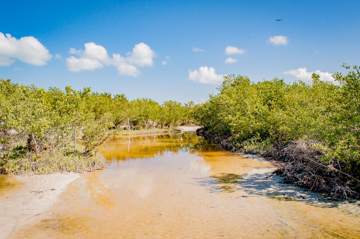 mangroves d'holbox