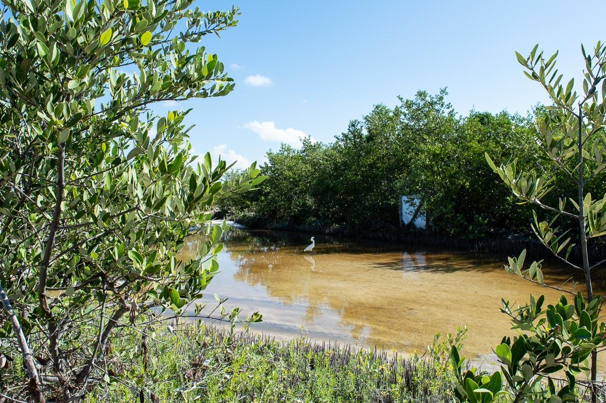mangroves et oiseaux à holbox