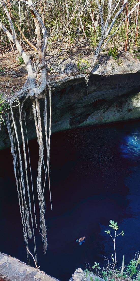racines du canote noh mozon