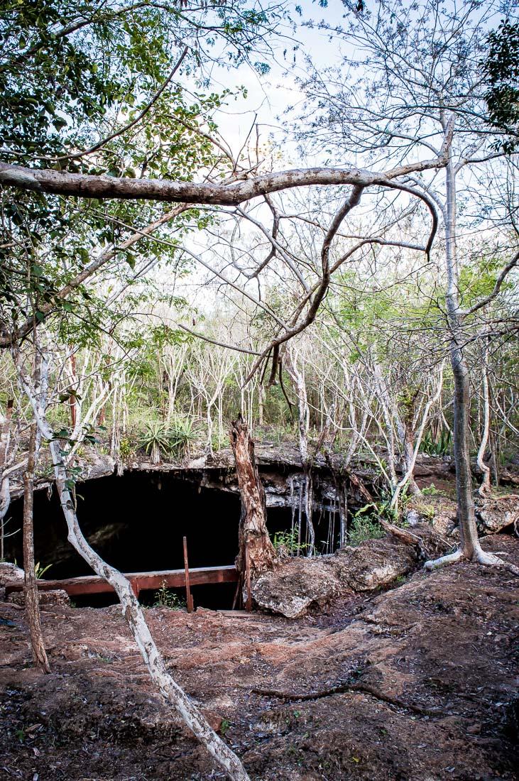 cénoté noh mozon un trou dans la forêt