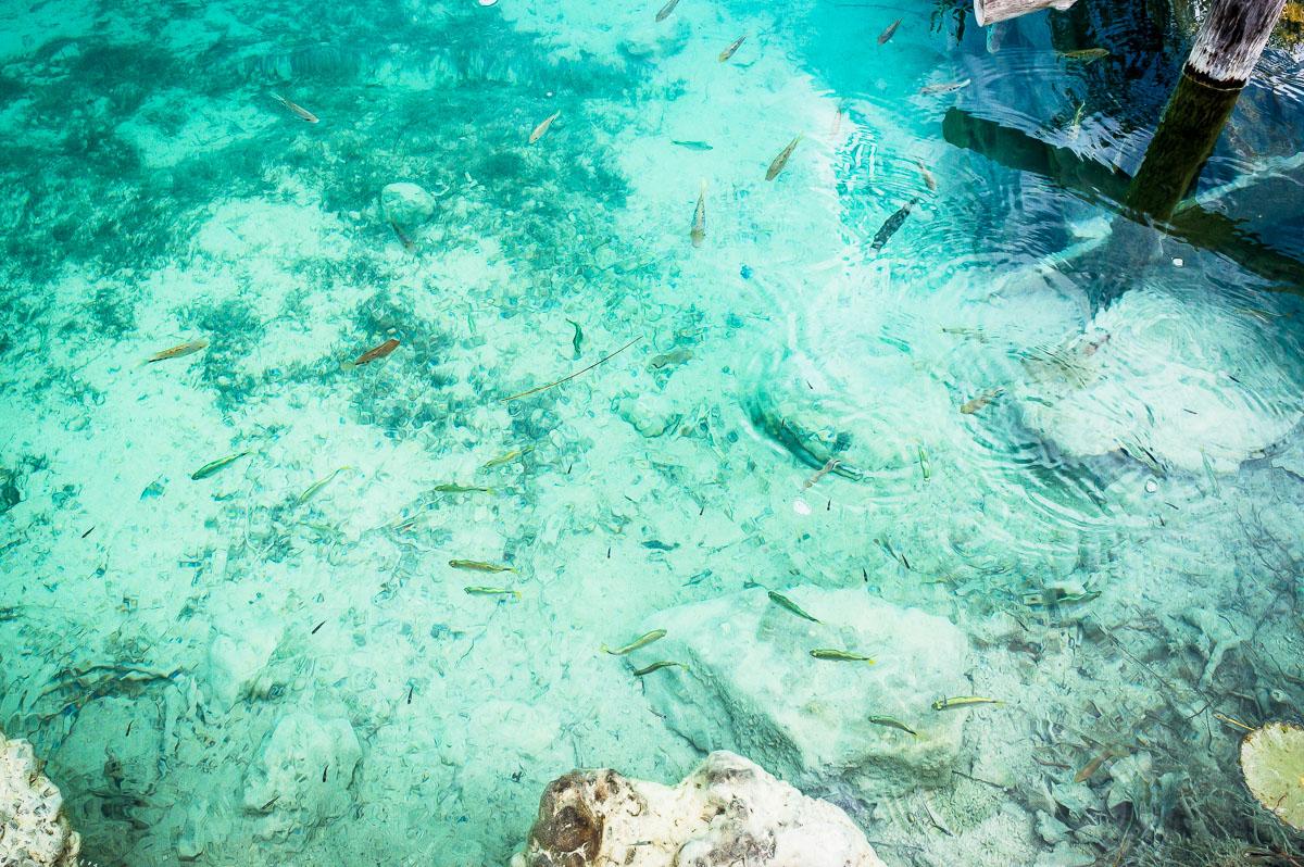 petits poissons dans l'eau de la lagune de Bacalar