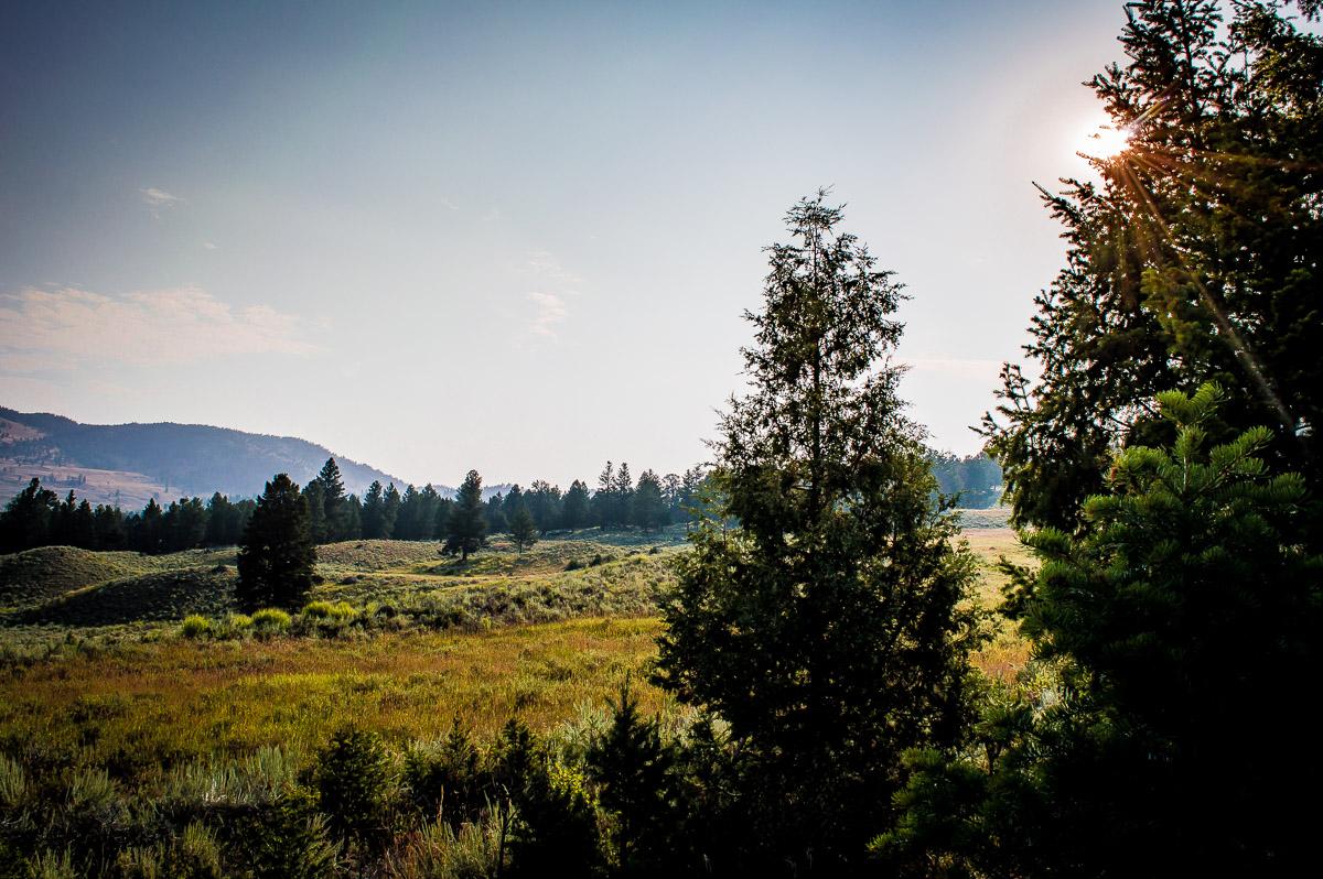 Hayden Valley au lever du soleil