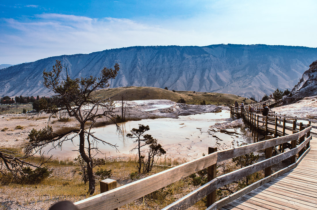 tour des lower terraces de mammoth hot springs à pieds