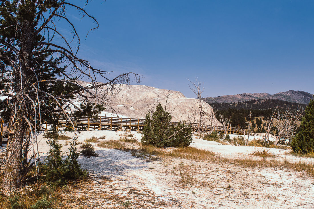 vue sur mammoth hotsprings