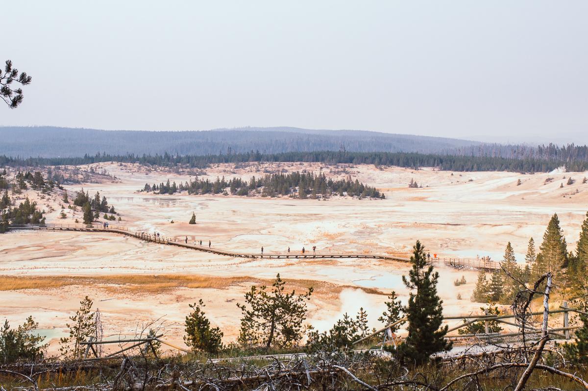 porcelain basin dans le secteur de Norris geyser basin
