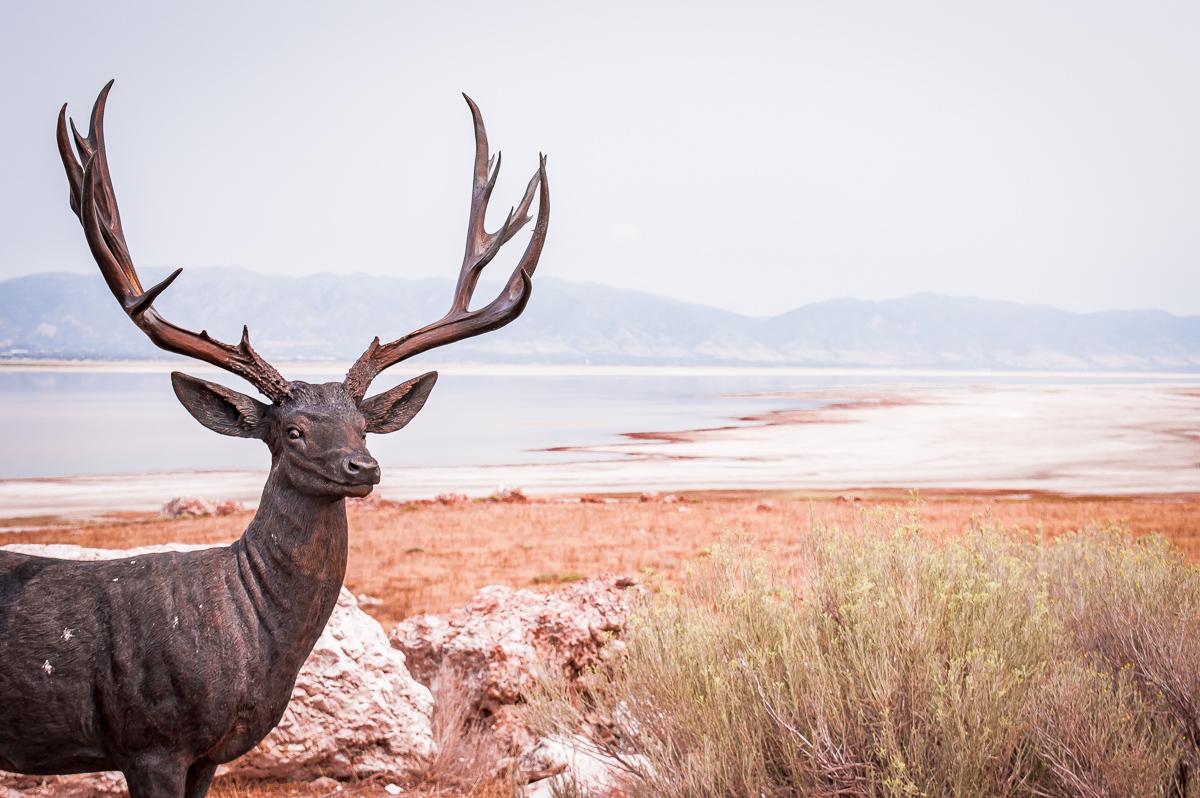lac de sel à antelope island