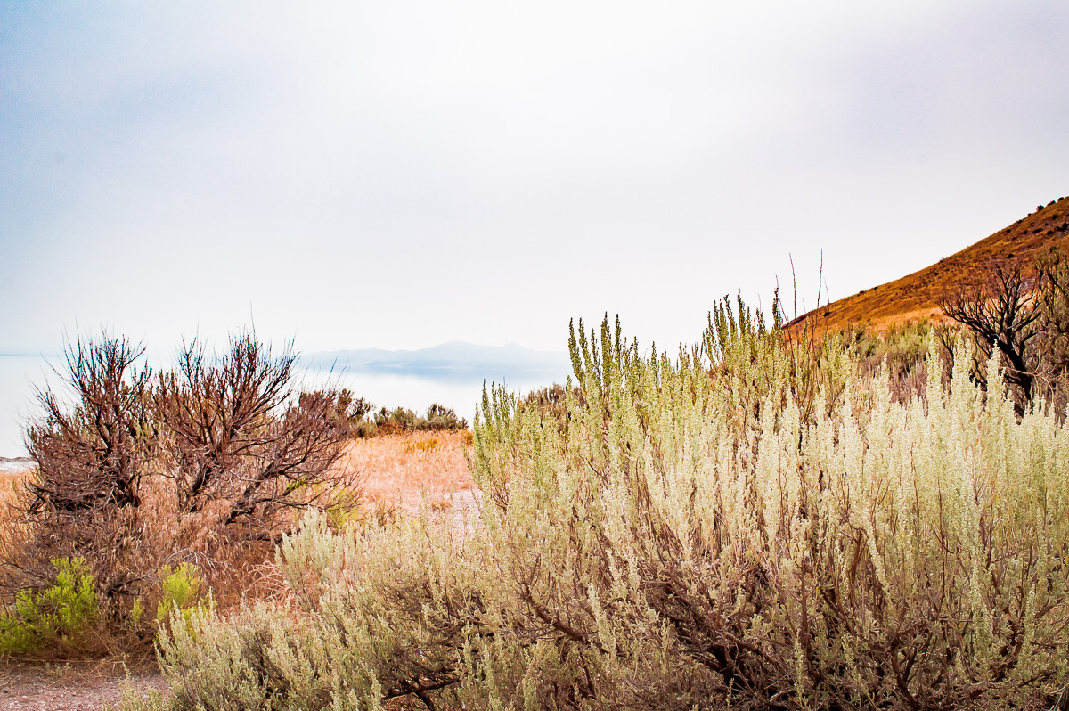 buffalo's trail à antelope island, Salt Lake City