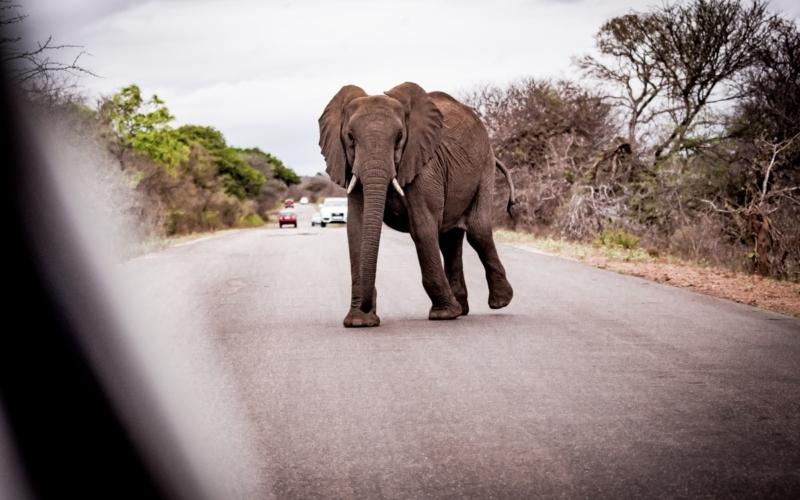 Mon guide pratique pour faire un safari seul dans le Parc Kruger