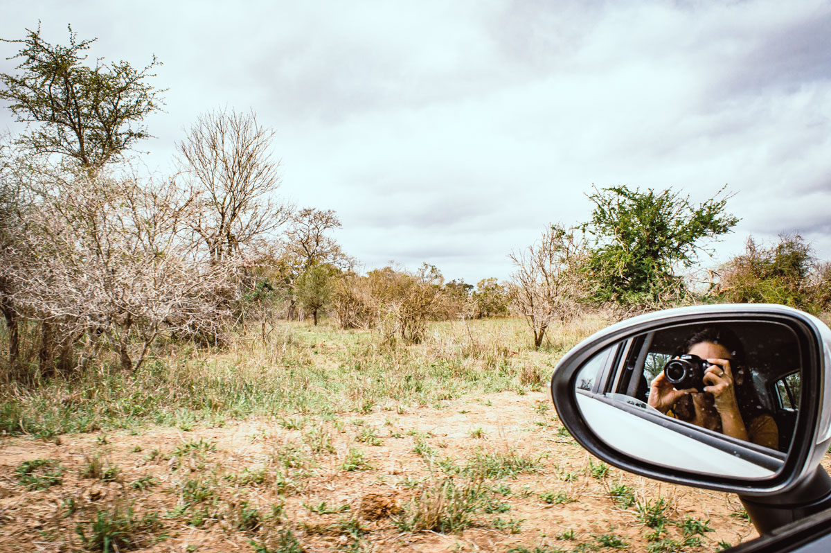 observer les Big five dans le Kruger