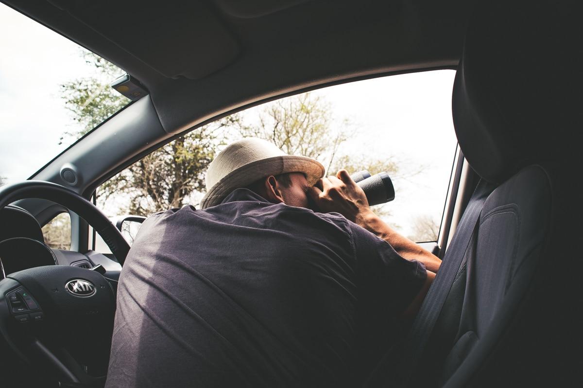 observer les animaux pendant un safari