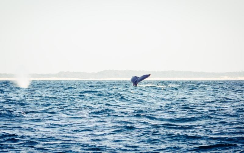 Observer les baleines à Saint Lucia dans la zone humide d'Isimangaliso