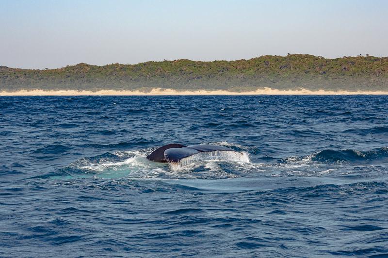 safari baleines en Afrique du Sud