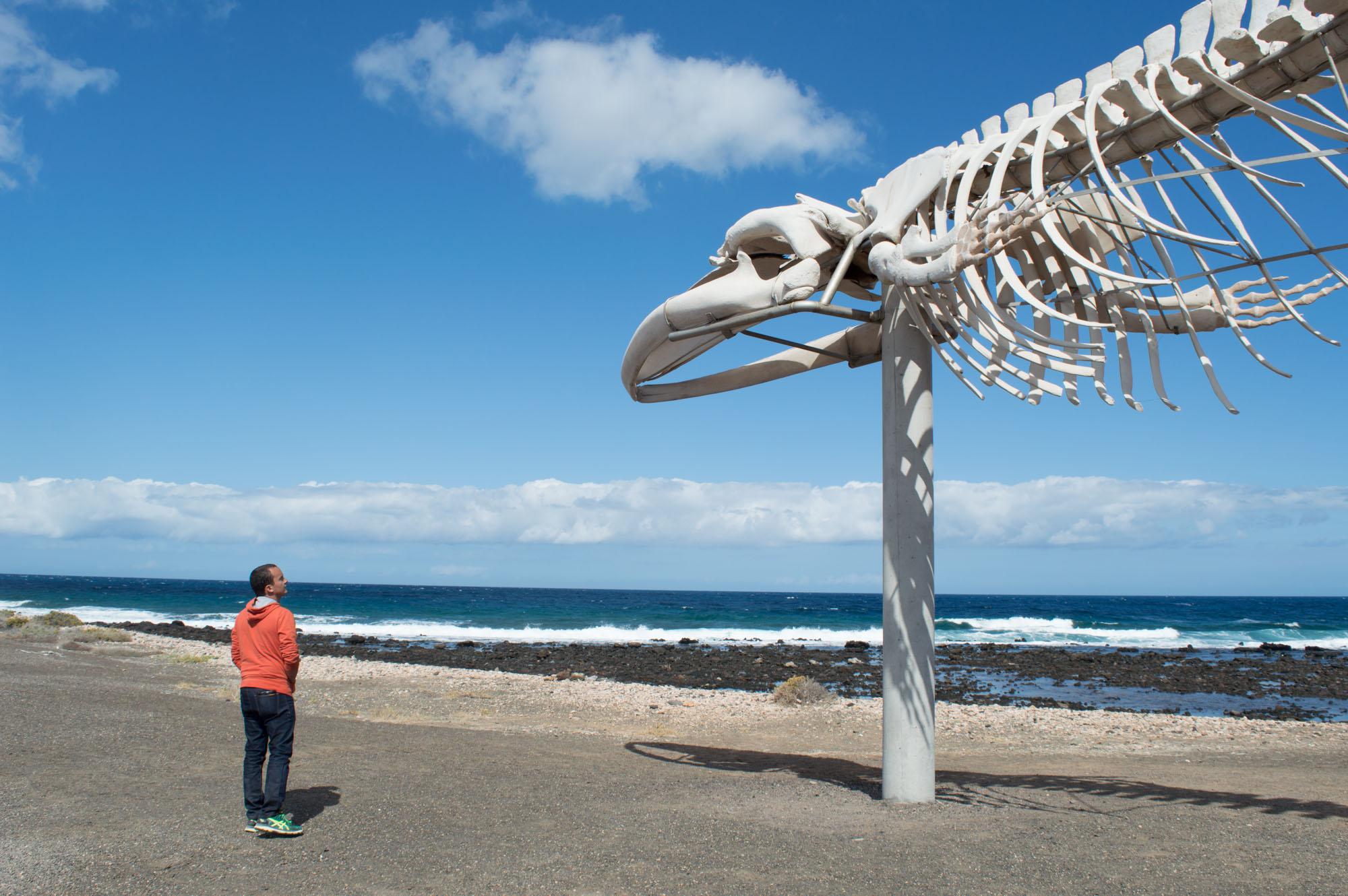 squelette géant de baleine