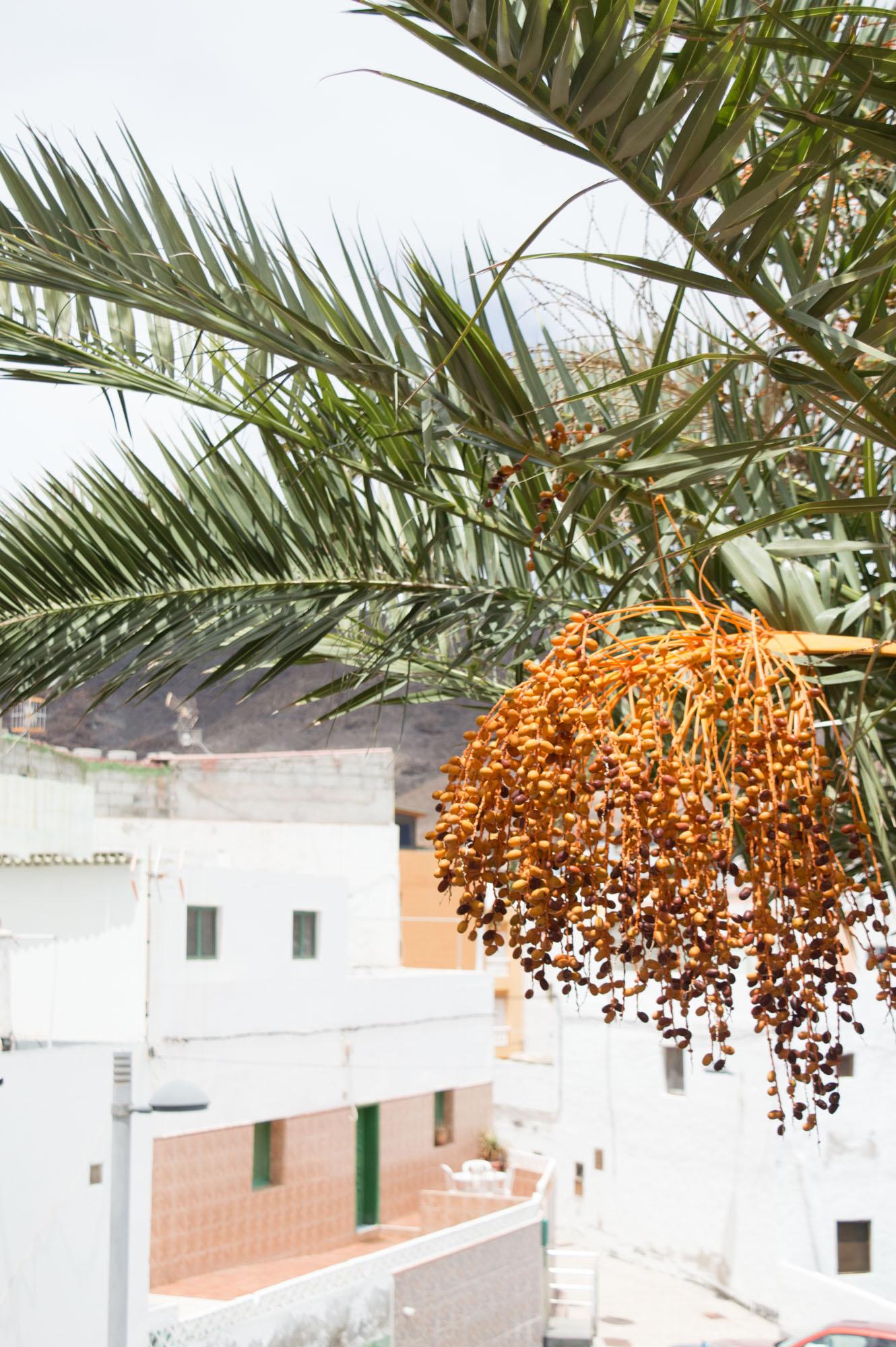 fruit du palmier