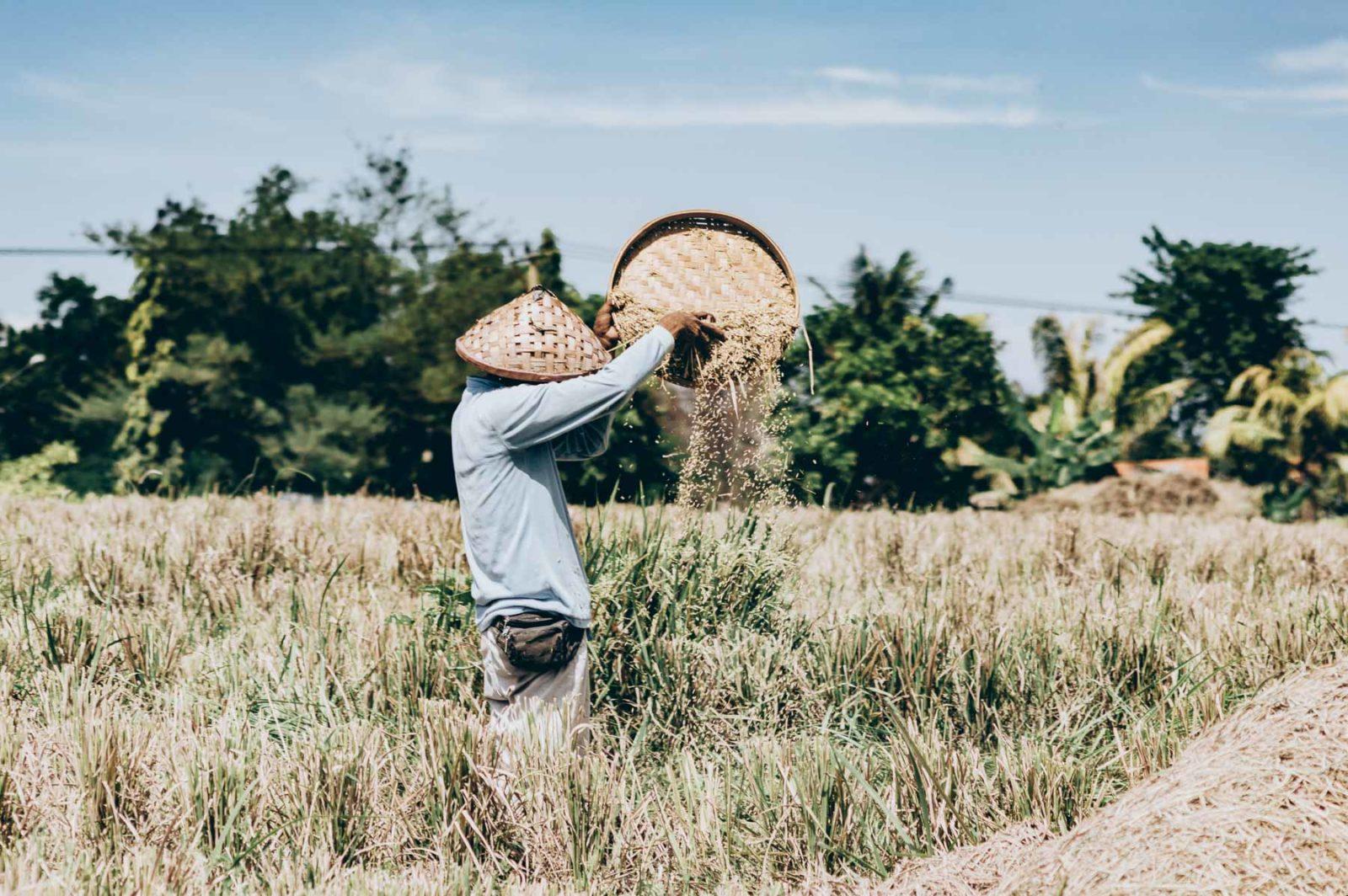 paysan des les rizières de Bali
