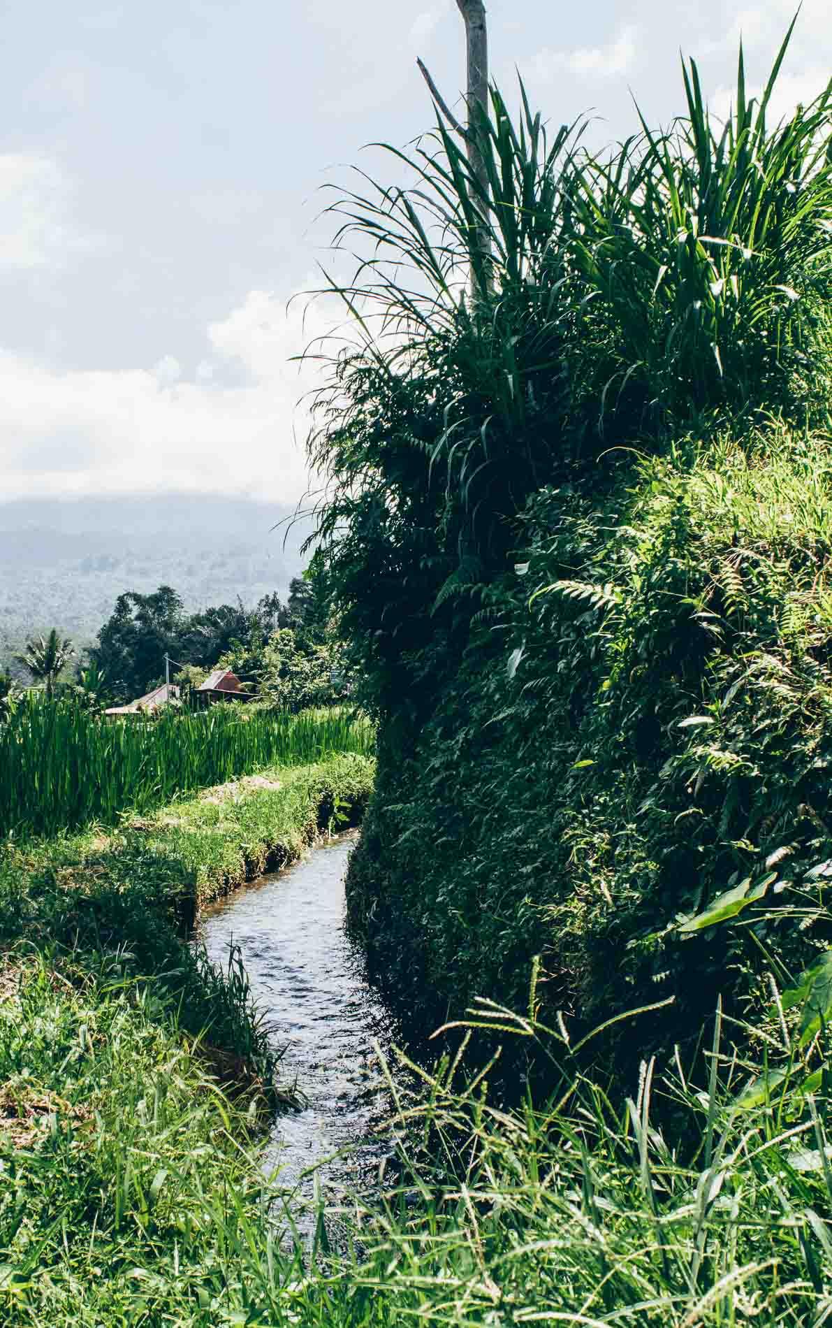 petit ruisseau à Jatiluwih