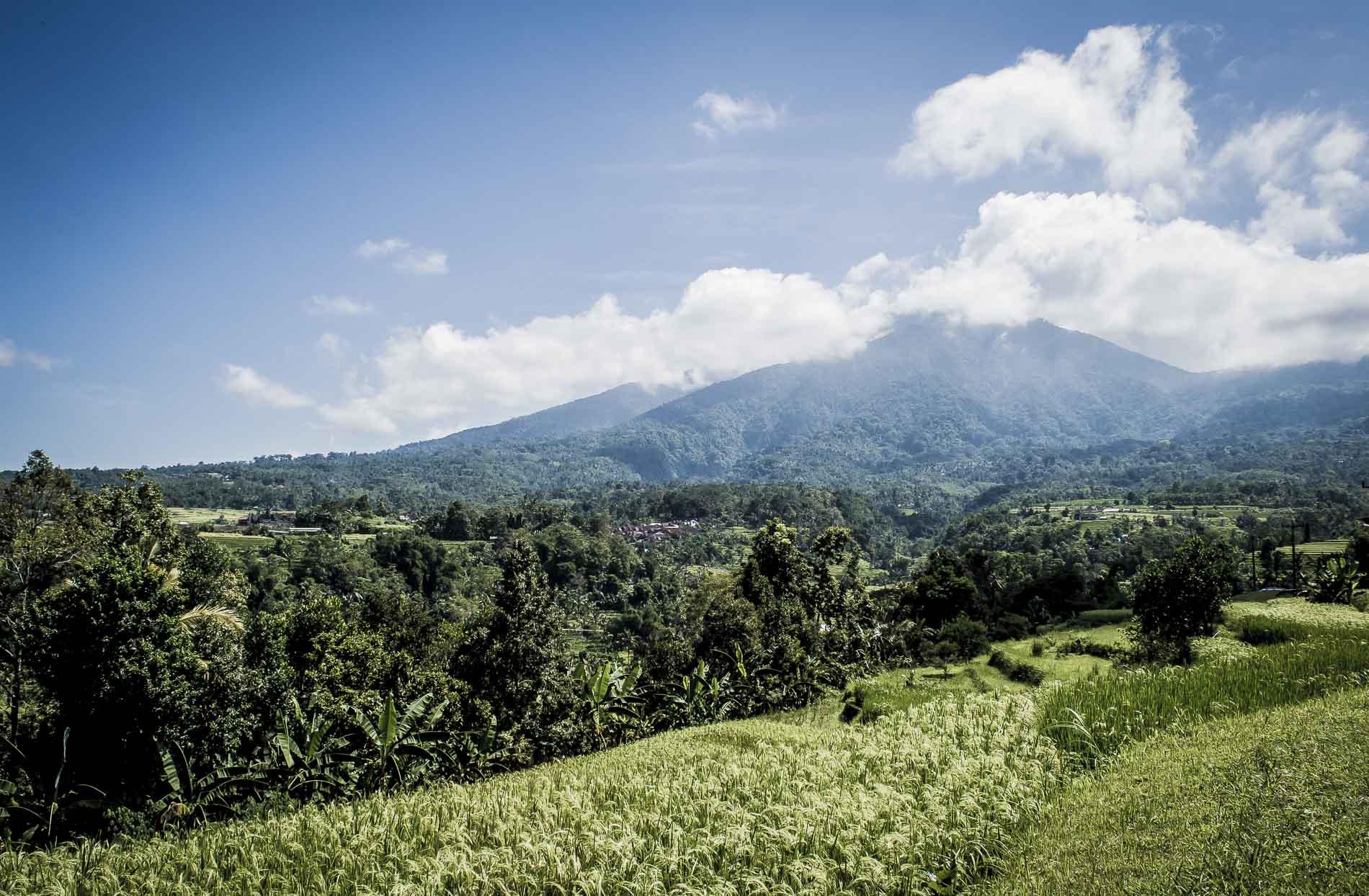 que voir dans le centre de bali : vue sur les rizieres de Jatiluwih