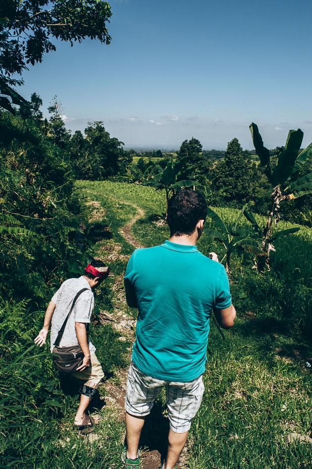 marcher dans les rizieres de jatiluwih
