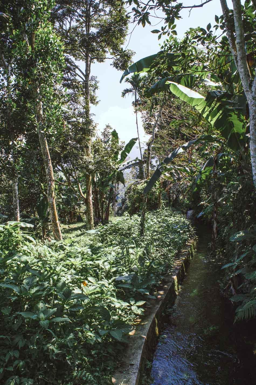 ruisseau à Jatiluwih